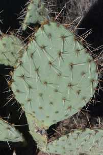 ArizonaRS (460)-min
