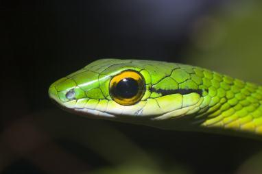Snake2-min